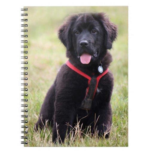 Newfoundland dog puppy cute photo, gift note books