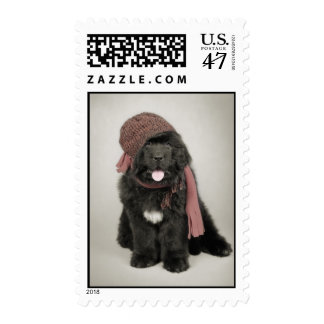 Newfoundland dog puppy postage