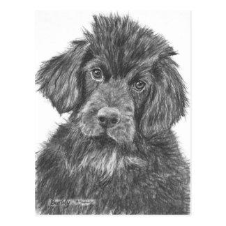 Newfoundland Dog Puppy Postcards