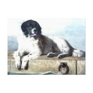 Newfoundland Dog Vintage Painting Canvas Print