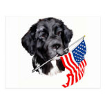 Newfoundland Dog with Flag Postcard