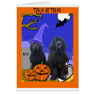 Newfoundland Dogs Halloween Greeting Card