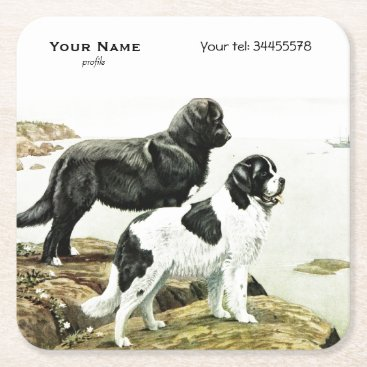 Newfoundland dogs - personalized square paper coaster