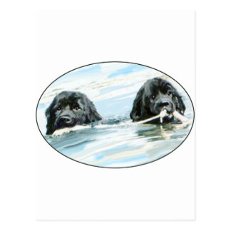 Newfoundland Dogs Swimming Postcard