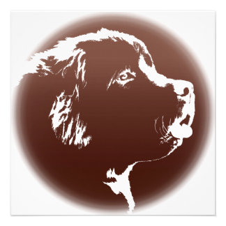 Newfoundland Invitations Personalized Dog Card