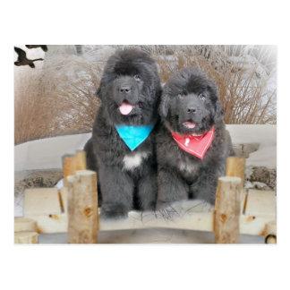 Newfoundland Puppies Love The Beach Postcard