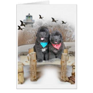 Newfoundland Puppies on beach cards