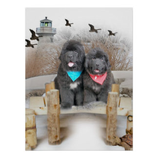 Newfoundland Puppies on beach Poster