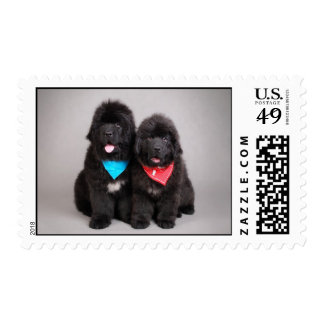 Newfoundland puppies postage stamps
