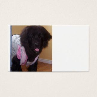 Newfoundland_puppy_2.png Business Card