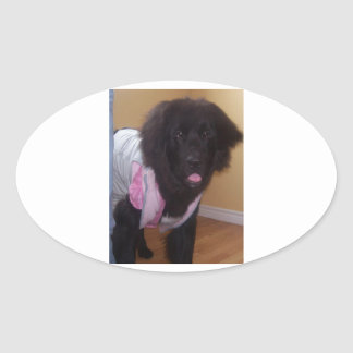Newfoundland_puppy_2.png Oval Sticker