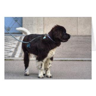 Newfoundland Puppy Card