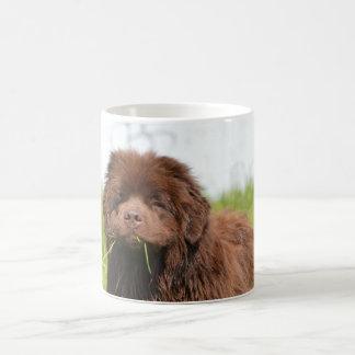 Newfoundland puppy coffee mug