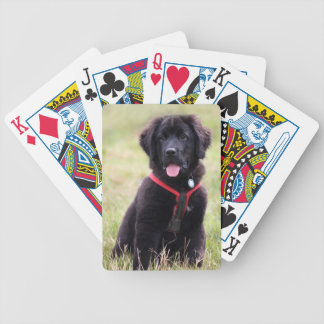 Newfoundland puppy dog cute beautiful photo gift bicycle playing cards