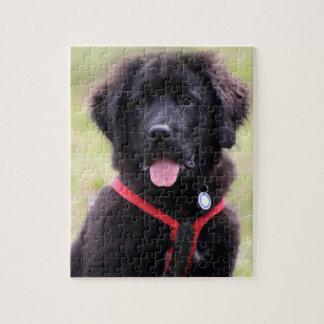 Newfoundland puppy dog cute photo jigsaw jigsaw puzzles