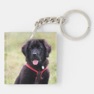 Newfoundland puppy dog newfie beautiful photo keychain
