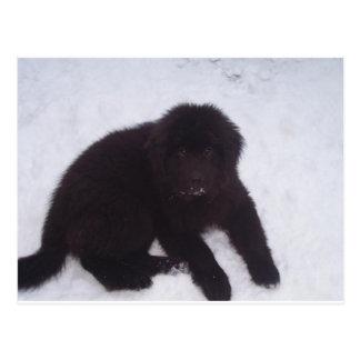 Newfoundland_puppy Postal