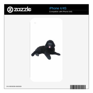 Newfoundland Puppy Skins For iPhone 4S