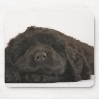 Newfoundland Puppy sleeping (Canis familiaris). Mouse Pad