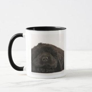 Newfoundland Puppy sleeping (Canis familiaris). Mug