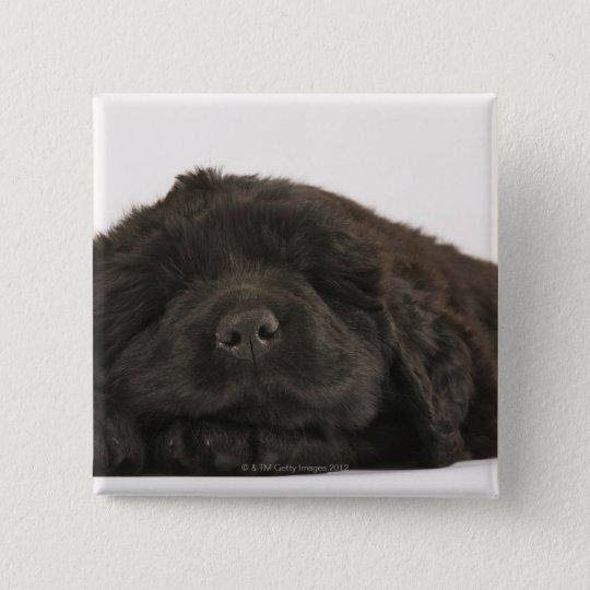 Newfoundland Puppy sleeping (Canis familiaris). Pinback Button