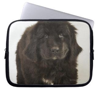 Newfoundland puppy, studio shot computer sleeves