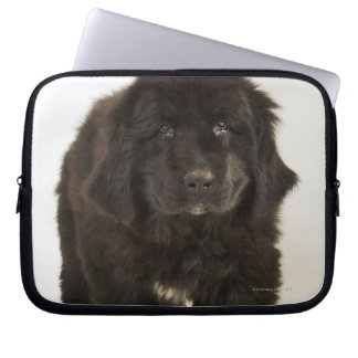 Newfoundland puppy, studio shot laptop sleeve