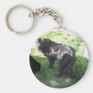 Newfoundland Ruby in back yard 255 Keychain