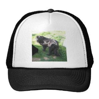 Newfoundland Ruby in back yard 255 Trucker Hat