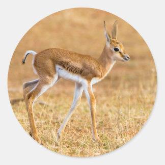 Newly Born Springbok (Antidorcas Marsupialis) Classic Round Sticker