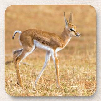 Newly Born Springbok (Antidorcas Marsupialis) Drink Coaster