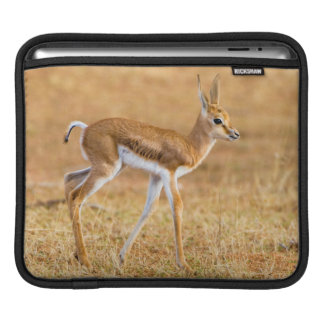 Newly Born Springbok (Antidorcas Marsupialis) iPad Sleeves