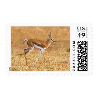 Newly Born Springbok (Antidorcas Marsupialis) Postage Stamps