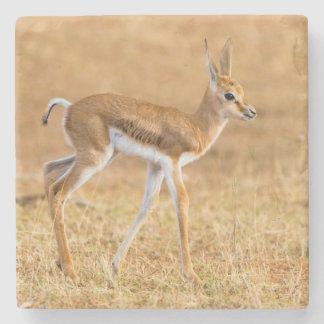 Newly Born Springbok (Antidorcas Marsupialis) Stone Coaster