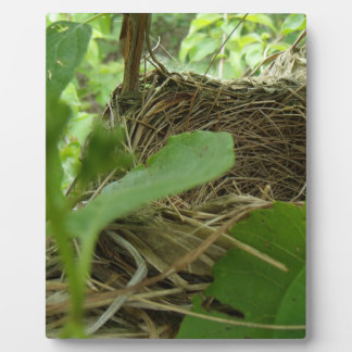Newly Built but Empty Bird Nest in a Mulberry Tree Plaque