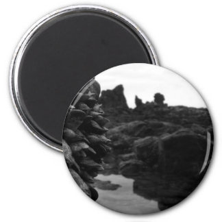 Newport Beach BW Rocks and muscles Magnet