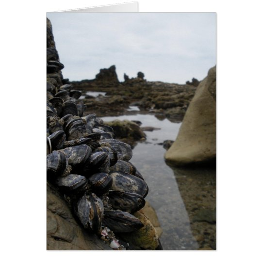 Newport Beach Muscles at Low Tide Card