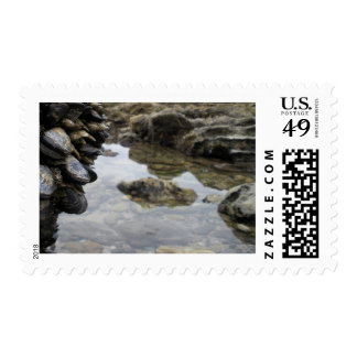 Newport Beach Rocks and Muscles Postage Stamp