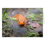 Newt Notecard Stationery Note Card