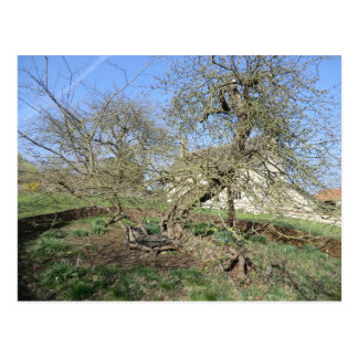 Newton's Tree at Woolsthorpe Manor Postcard