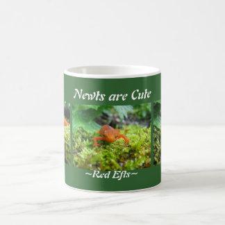Newts are Cute Classic White Coffee Mug