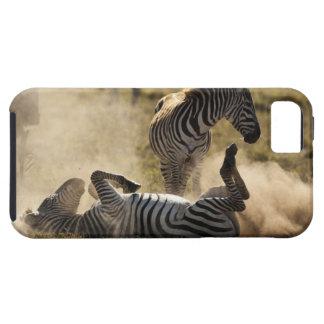 Ngorongoro Crater, Tanzania, Common Zebra, Equus iPhone 5 Case