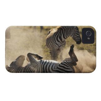 Ngorongoro Crater, Tanzania, Common Zebra, Equus iPhone 4 Case