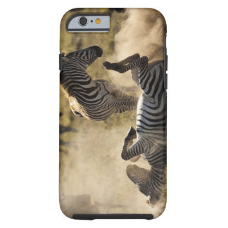 Ngorongoro Crater, Tanzania, Common Zebra, Equus iPhone 6 Case