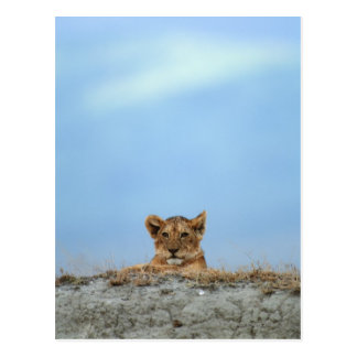 Ngorongoro Crater, Tanzania Postcard