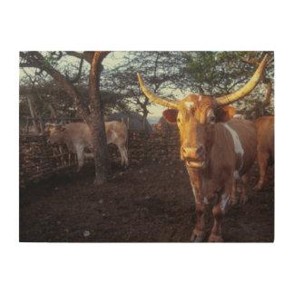 Nguni Cattle In Enclosure, Shakaland, Eshowe Wood Canvases