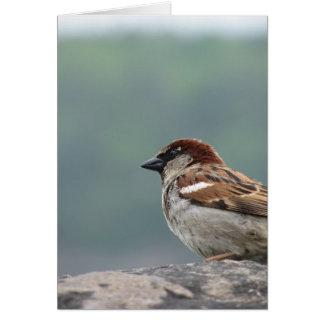 Niagara Falls Sparrow Greeting Card