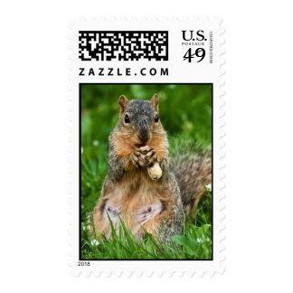 Nibbling Postage Stamp