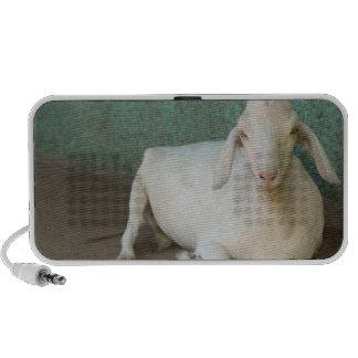 Nicaragua, Granada. Cabra que descansa sobre el pó iPod Altavoz