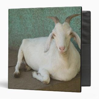 Nicaragua, Granada. Goat resting on porch in Binder